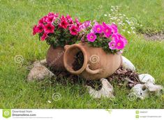 Anfore Da Giardino Casamia Idea Di Immagine Con Aiuole Con Sassi E Anfore E Le Vecchie Anfore Ceramiche Con La Petunia Rosa E Rossa Fiorisce 53680337 Aiuole Con Sassi E Anfore 1300x957px Petunia Tattoo, Container Gardening Vegetables, Container Plants, Succulent Containers, Container Flowers, Vegetable Gardening, Fall Planters, Flower Planters, Petunia Flower