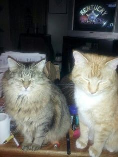 Harley and Dozer enjoying the flash!