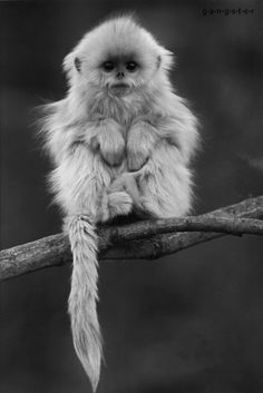 Pin by Malu Santos on B&W Animals | Pinterest