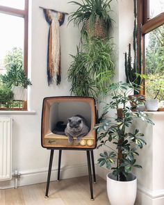Mia here is modelling one of my new wall hangings, what do you guys think of it? I'm busy behind the scenes making lots… Cat Room, Pet Furniture, Dream Rooms, My New Room, Decoration, Beautiful Homes, Wall Hangings, Sweet Home, Room Decor