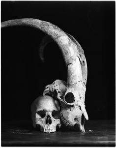 Awesome skulls photograph, care of Dead Set Boutique in Christchurch. Originally from Mastergood blog.