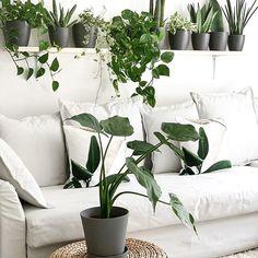 Tamara (@my_green_home_and_me) • Instagram-Fotos und -Videos Modern Minimalist, Indoor Plants, Keep It Cleaner, Instagram, Urban, Home, Garden, Videos, Couch