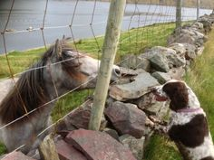 Canine friends are also welcome on Connemara Equestrian Escapes holidays Riding Holiday, Ireland Holiday, Connemara, Horse Riding, Horseback Riding, Equestrian, Horses, Holidays, Friends