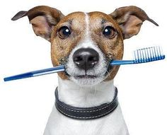 The Top-10 signs you have bad breath: 1.Your dog brings you your toothbrush.  2.Your dog won't sniff you. 3.You walk by skunks and they run.  4.Your teeth are making plans to escape.  5.Your toothbrush prays every morning and night.  6.Your dentist offers you prescription strength Tic-Tac's.  7.You are playing in a sand box and the cat tries to bury you.   8.The Listerine refuses to come out of the bottle. 9.Your hygienist makes you suck on a Dr. Scholl Odor Eater in the waiting…