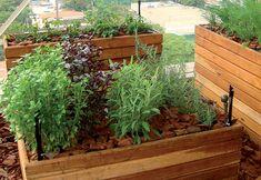 montagem de capa com alimentos organicos - Pesquisa Google