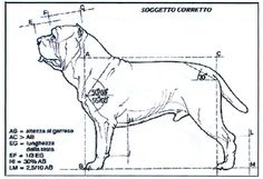 dog structure - Google Search