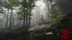 Elevate your workflow with the Forest Environment - Dynamic Nature asset from NatureManufacture. Find this & other Vegetation options on the Unity Asset Store.