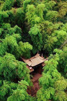 """""""Deep in the Forest"""", Shanghai, China >> épinglé par Mayoparasol ®, maillots de bain anti UV et vêtements anti UV - Visitez mayoparasol.com"""