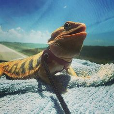 1000 Images About Crazy About Reptiles On Pinterest