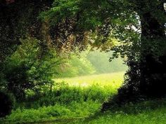 """""""When I first open my eyes upon the morning meadows and look out upon the beautiful world, I thank God I am alive. Beautiful World, Beautiful Places, Summer Dream, English Countryside, Country Life, Country Walk, Beautiful Landscapes, Fine Art Prints, Scenery"""
