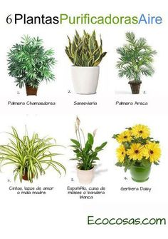 Plantas on pinterest interiors sansevieria trifasciata - Plantas de interior nombres ...