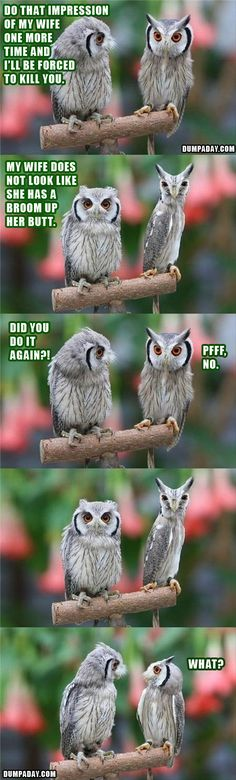 This is your owl. This is your owl on drugs Funny Owls, Funny Birds, Funny Cute, The Funny, Funny Animals, Cute Animals, Scary Funny, Funny Troll, Super Funny