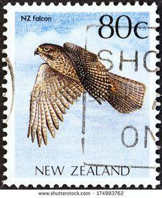 New Zealand Falcon - Karearea -  aka - Sparrow Hawk, Bush Hawk.  NZ's only Falcon.  Falco Novaeseelandiae