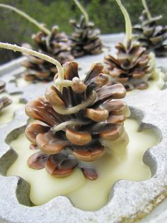 Campy Camp Crafts, A Wayward Wind, Pinecone Fire Starters - Geschenke Pine Cone Art, Pine Cone Crafts, Pine Cones, Nature Crafts, Fall Crafts, Holiday Crafts, Christmas Crafts, Xmas, Camping Crafts
