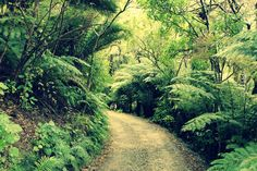 Not a bad commute to work at Mistletoe Bay Eco Village.   www.mistletoebay.co.nz  https://www.facebook.com/mistletoebay #Mistletoe #Bay #Eco #Village #New #Zealand #Travel #South #Island #Malborough #Sounds #Wedding #Family #Summer #School #Holidays #Sustainability #Environment #Experience #Something #Different #Water #Sports #Photography #Pristine #Queen #Charlotte #Track