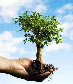 Dona un albero a Roma: l'iniziativa green della città capitolina - Ambiente Bio