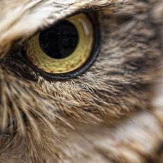 Animal Eyes 13, via Flickr.