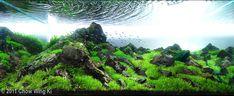 "2011 AGA Aquascaping Contest - Entry #115 - ""万天 Firmament""  Chow Wing Ki, Hong Kong Nil China - Just brilliant use of reflection"