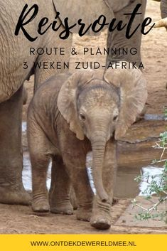 Op zoek naar inspiratie voor je reisroute door Zuid-Afrika? Ga zelf op pad met een huurauto en ontdek de mooiste plekjes van Zuid-Afrika in drie weken. Pad, Africa Travel, Travel Guide, South Africa, The Good Place, Elephant, Amazing Places, Blog, Animals