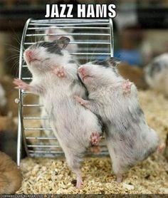 #jazzhands #hamsters #funny