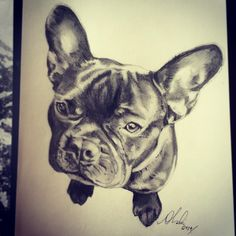 Finished A4 piece of a friends French Bulldog