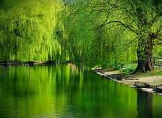 I always wanted a Weeping Willow tree so I can go sit under one and read/write/think/dream without being bothered by the people. A safe place in my little world.  I still want one, more than ever now.