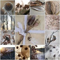 CAROLYN SAXBY - a new day - inspiring seed heads and the promise of a beautiful new day Colour Pallette, Palette, Pele Mele Photo, Collages, Carolyn Saxby, Secret Life Of Plants, Kurt Jackson, Photography Collage, Organic Form