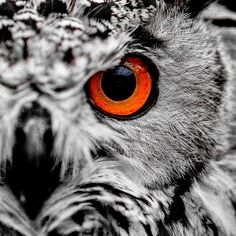 Owl Eye | Tattoo ideas