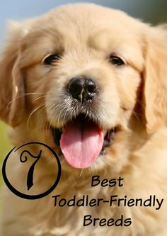 Puppies and toddlers are a great mix, if you get a breed that does well with young kids. If you're looking for the best puppies for toddlers, check out our picks!