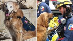 Bretagne, the last 9/11 search dog from Ground Zero, died on Monday with her best friend by her side. The dog was saluted as a fallen hero.