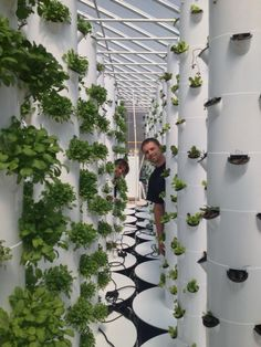 CO's 1st Vertical Farm!