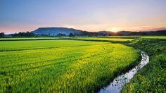 風景, 農地 / 田園 / 田畑, 田舎 / 村, 夕日 / 日の入り