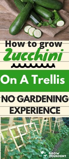 How To Grow Zucchini on A Trellis  #gardens#Zucchini#growyourmint
