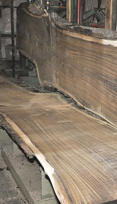 Very nice Black Walnut log, most slabs show minimal defects. Some boards have medium-heavy figure and a few even contain a double crotch. A great choice for table/bar/counter tops ~ Hearne Hardwoods Inc