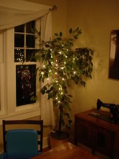 twinkle lights on ficus tree