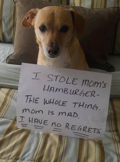The Damn Dog Stole My Food