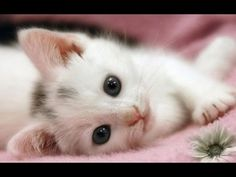Top 10 Cutest Kittens Videos Compilation [NEW HD].#FunnyCat #FunnyKittens #LOL #Humor #Cats #Kittens #Cute #CuteCats #CuteKittens