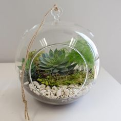 Defy gravity with this hanging terrarium kit. With the flat bottom, it can also be used on a tabletop! All you need to add is your favorite plant or succulent. Hanging Terrarium, Terrarium Plants, Hanging Plants, Indoor Grow Kits, Glass Shadow Box, Basket Decoration, Succulents Garden, Vases Decor, Air Plants