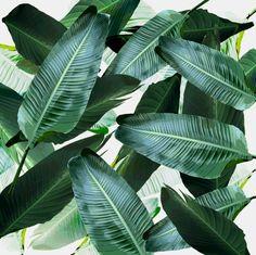 Tropical Palm leaf, banana leaf, greens, Hawaii, retro style Art Print