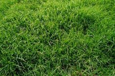 Sow grass seed in the spring for a fine lawn all summer long.