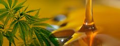 Cannabis Oil Vape variants and uses - http://www.ipodtax.ca/cannabis-oil-vape/