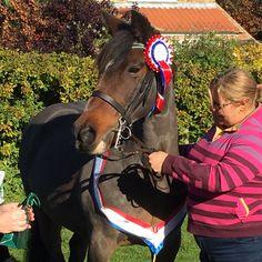Winner! Horses, Animals, Animales, Animaux, Animal, Animais, Horse