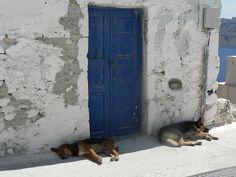 Let Sleeping Dogs Lie. Oia, Santorini, GR