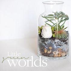 Little green worlds (Basic terrariums)
