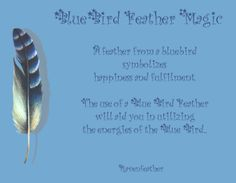 Bluebird feather magic