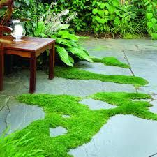 hardscape with pergola moss - Google Search