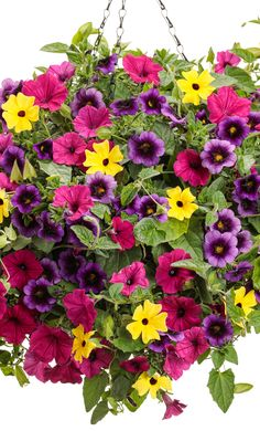 Flower Bomb This hanging basket recipe is exploding with bright blooms including Grape Punch calibra Home Flowers, Bright Flowers, Fall Flowers, Yellow Flowers, Container Flowers, Flower Planters, Container Plants, Container Gardening, Purple Garden