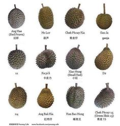 Varieties Of Durian