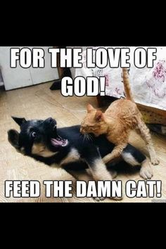 Feed the cat!!