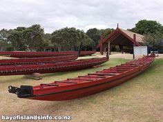 Maori People Of New Zealand - Bing Images